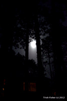 Full Moon over Cabin in the Forest